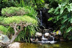 Jardín verde con caer del agua imagenes de archivo