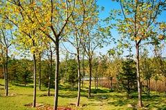 Jardín verde de la expo en Zhengzhou Imagen de archivo libre de regalías