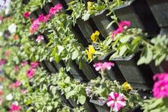 Jardín verde de la pared con las flores Imagen de archivo