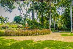 Jardín verde del parque público del verano con el cielo azul en el día nublado Luz hermosa del día en parque público con el campo Fotos de archivo libres de regalías