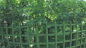 Jardín verde del verano de los cuartos almacen de metraje de vídeo