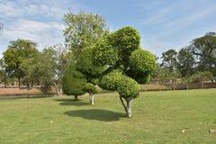 Jardín verde en Ayutthaya, en Tailandia, Fotos de archivo libres de regalías