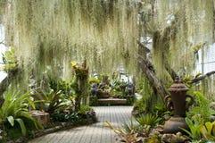 Jardín verde enorme del helecho Foto de archivo