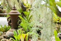 Jardín verde enorme del helecho Fotografía de archivo