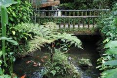 Jardín verde hermoso Imagen de archivo
