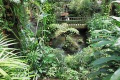 Jardín verde hermoso Imágenes de archivo libres de regalías