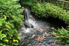 Jardín verde hermoso Foto de archivo libre de regalías