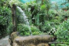 Jardín verde hermoso Fotografía de archivo libre de regalías