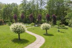 Jardín verde hermoso con una trayectoria que va entre dos sauces japoneses Foto de archivo