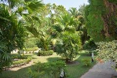 Jardín verde hermoso de la naturaleza Fotos de archivo
