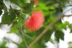 Jardín verde hermoso Flor Imagen de archivo libre de regalías