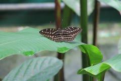 Jardín verde hermoso mariposa de b Fotografía de archivo