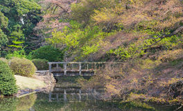 Jardín verde japonés Fotografía de archivo libre de regalías