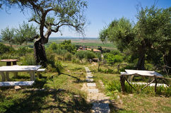 Jardín verde oliva en país mediterráneo Foto de archivo