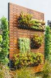 Jardín vertical Imagen de archivo libre de regalías