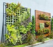 Jardín vertical Fotografía de archivo