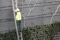 Jardín vertical Foto de archivo libre de regalías