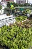 Jardín vertical Fotografía de archivo libre de regalías