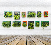 Jardín vertical en la pared de ladrillo blanca Imagenes de archivo
