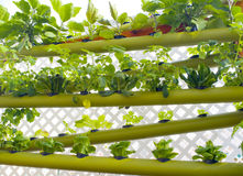 Jardín vertical hidropónico de la tierra Fotos de archivo libres de regalías