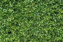 Jardín vertical verde Imágenes de archivo libres de regalías