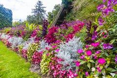 Jardín vivo Imágenes de archivo libres de regalías