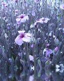 Jardín y agua de flor Imagen de archivo libre de regalías