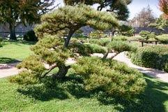 Jardín y arbustos del estilo japonés Imagenes de archivo