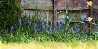 Jardín y cerca en resorte Imágenes de archivo libres de regalías