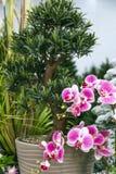 Jardín y decoración del diseño, detalles y elementos caseros de la decoración interior Las plantas ornamentales artificiales pica fotos de archivo libres de regalías