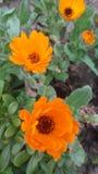 Jardín y flores Fotografía de archivo libre de regalías