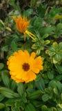 Jardín y flores Fotografía de archivo