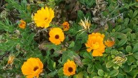 Jardín y flores Foto de archivo