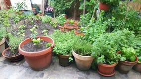 Jardín y plantas Imagen de archivo