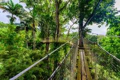 Jard?n de la balata, jard?n bot?nico de Martinica - de Paradise en la isla caribe?a tropical con puentes colgantes - Francia foto de archivo