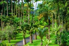 Jard?n de la balata, jard?n bot?nico de Martinica - de Paradise en la isla caribe?a tropical con puentes colgantes - Francia imagen de archivo