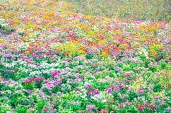 Jarda colorida misturada das flores Imagens de Stock Royalty Free