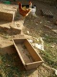 Jarda das galinhas Fotografia de Stock Royalty Free
