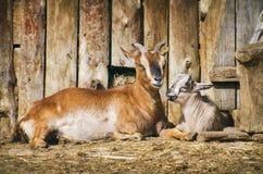 Jarda de exploração agrícola com animais Fotos de Stock