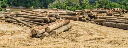 Jarda do log no riverbank de Mahakam imagens de stock royalty free