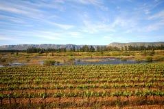 Jarda do vinho Fotografia de Stock