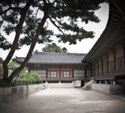 Jarda, pinhos e casa antiga do palácio coreano      Fotos de Stock
