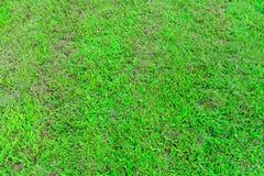 Jarda verde Imagem de Stock Royalty Free