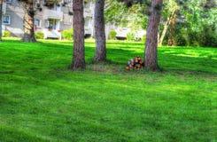 Jarda verde - quintal Fotos de Stock