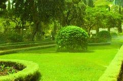 Jardim. Fotografia de Stock
