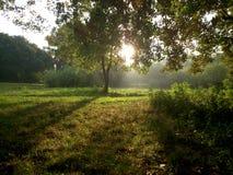 Jardim Imagem de Stock Royalty Free