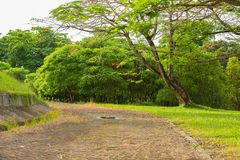 Jardim abandonado Fotografia de Stock