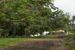 Jardim abandonado Imagem de Stock Royalty Free
