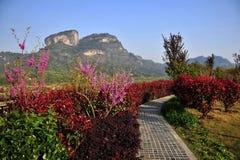 Jardim alpino Fotografia de Stock