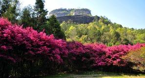 Jardim alpino Imagens de Stock